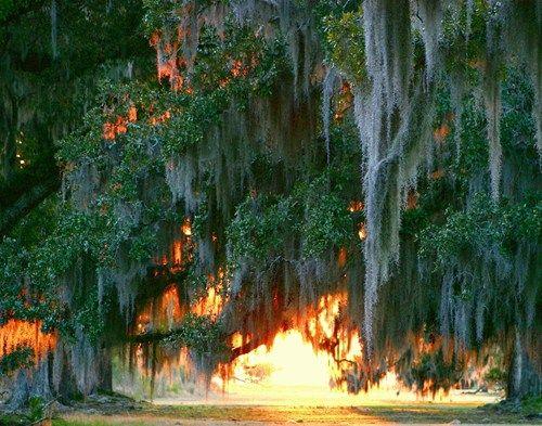 Pinterest-Louisiana